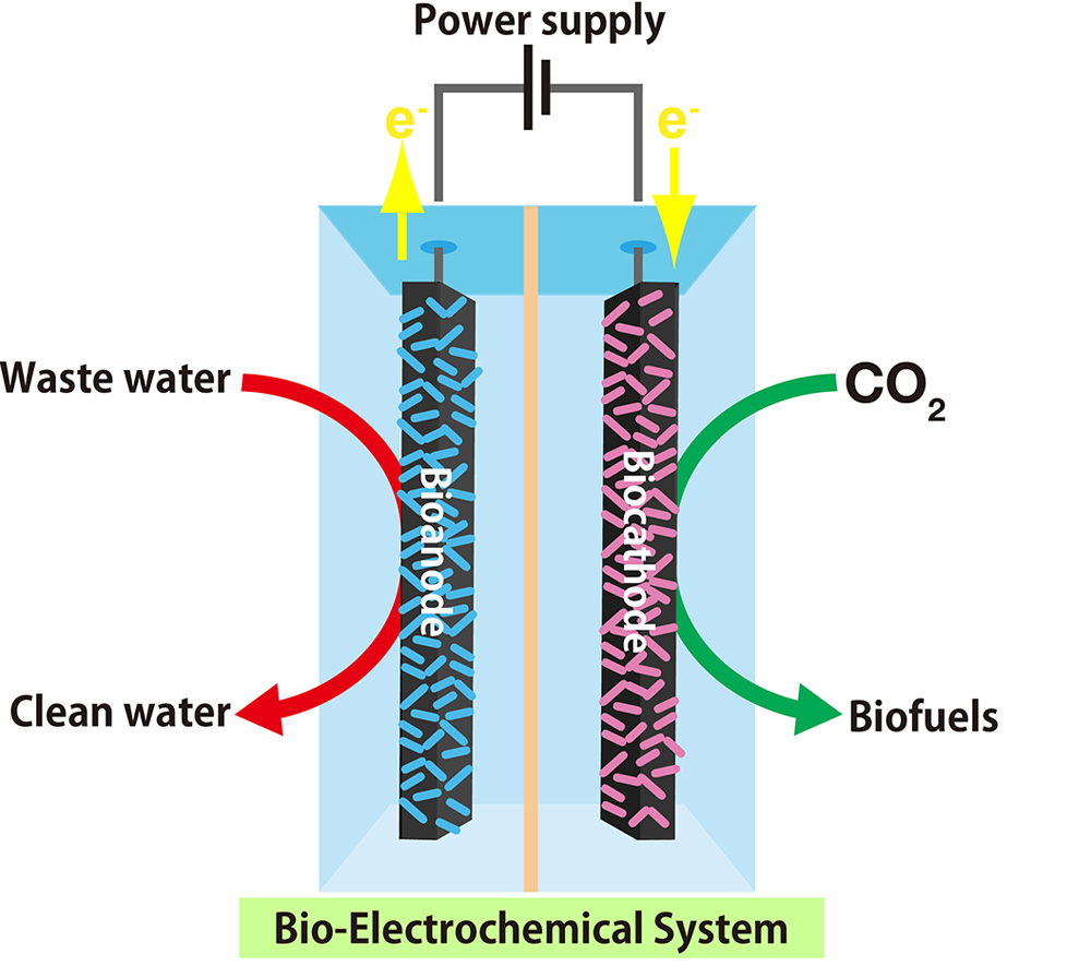 Energy Conversion/Generation by using Microbial Symbiosis